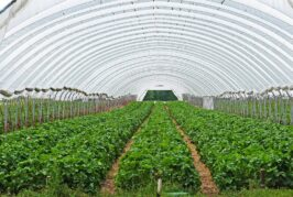 Leskovac: Konkurs za subvenciju poljoprivrednih gazdinstava otvoren do 4. oktobra