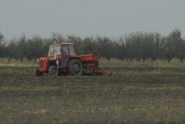 Počela setva pšenice, cene na istorijskom maksimumu